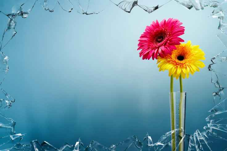 yellow and pink flowers view behind broken glass