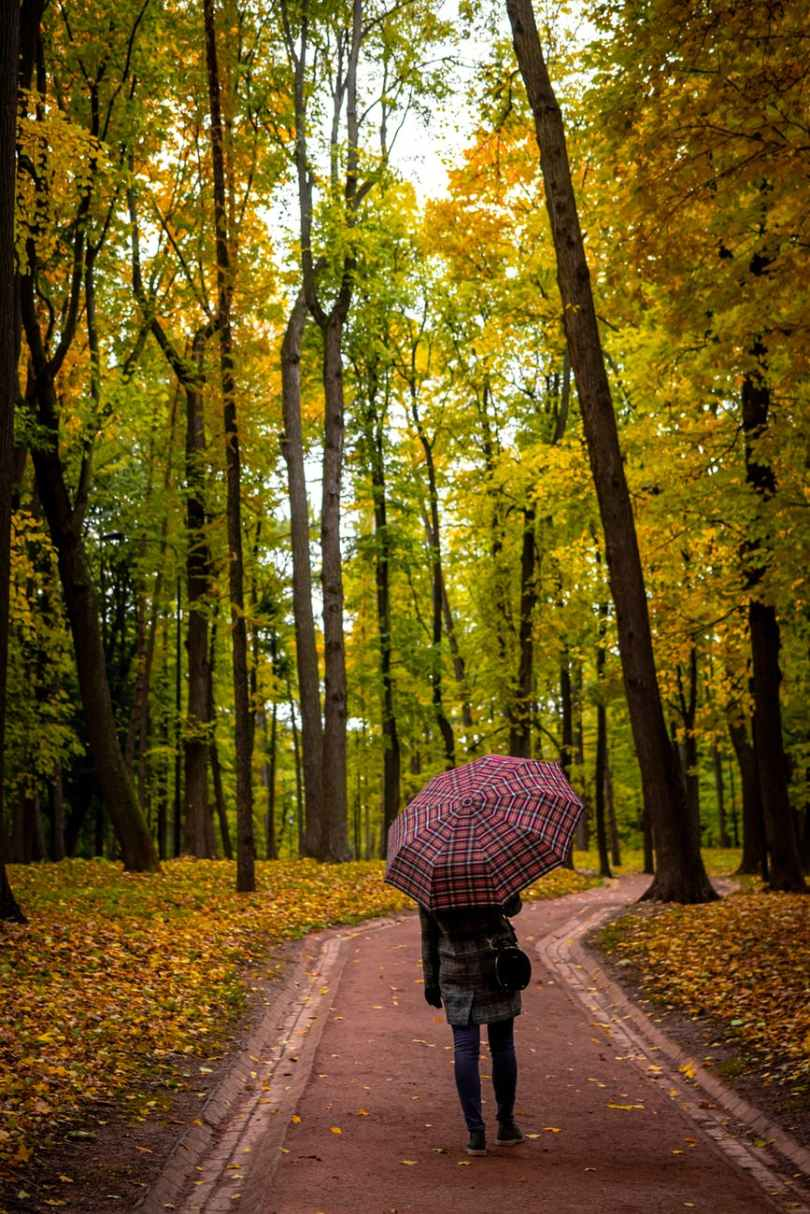 photo of person holding umbrella